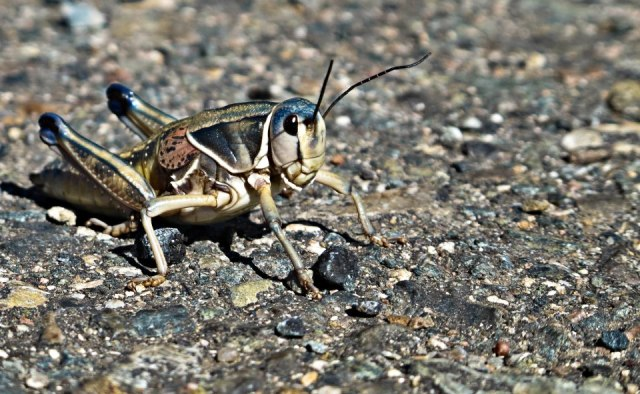 These grasshoppers were all over the road on day two of our tour.